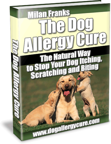 dog health and nutrition heal your dog naturally