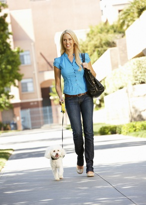 white poodle walking on a leash beside his woman owner