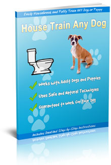 potty training your dog house train any dog